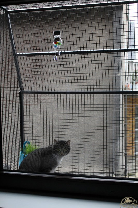 _the3cats_2015_03_19_0982
