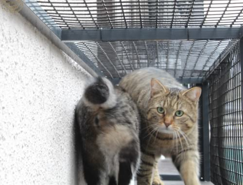 _the3cats_2015_03_19_1128