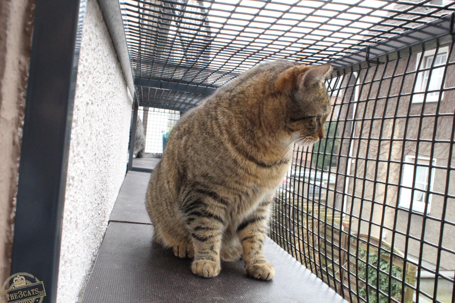 LiJaLuJi: Der Katzenbalkon [Teil 1 – Die Montage]