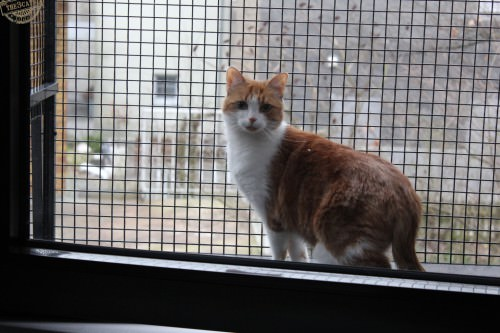 _the3cats_2015_03_19_1234