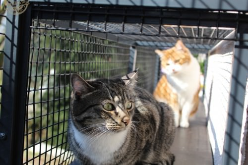 _the3cats_2015_03_28_2016
