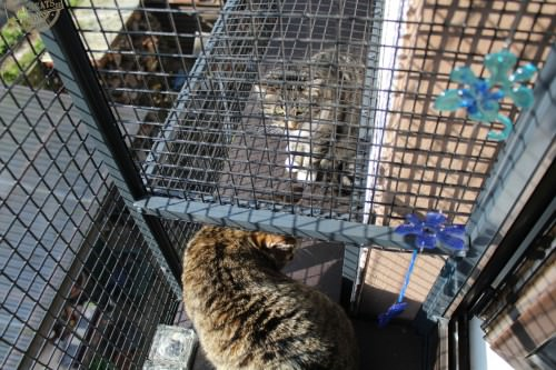 _the3cats_2015_03_28_2368
