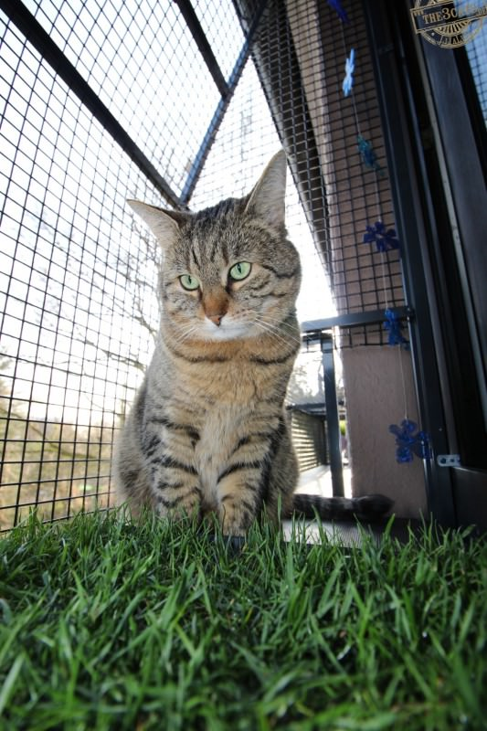 _the3cats_2015_04_09_4584