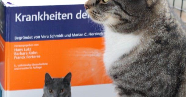 Jasper: Buchrezension *Krankheiten der Katze* – Enke Verlag