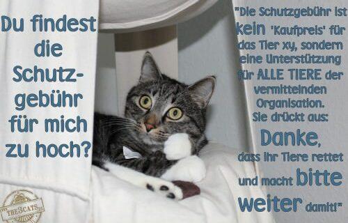the3cats_Schutzgebühr