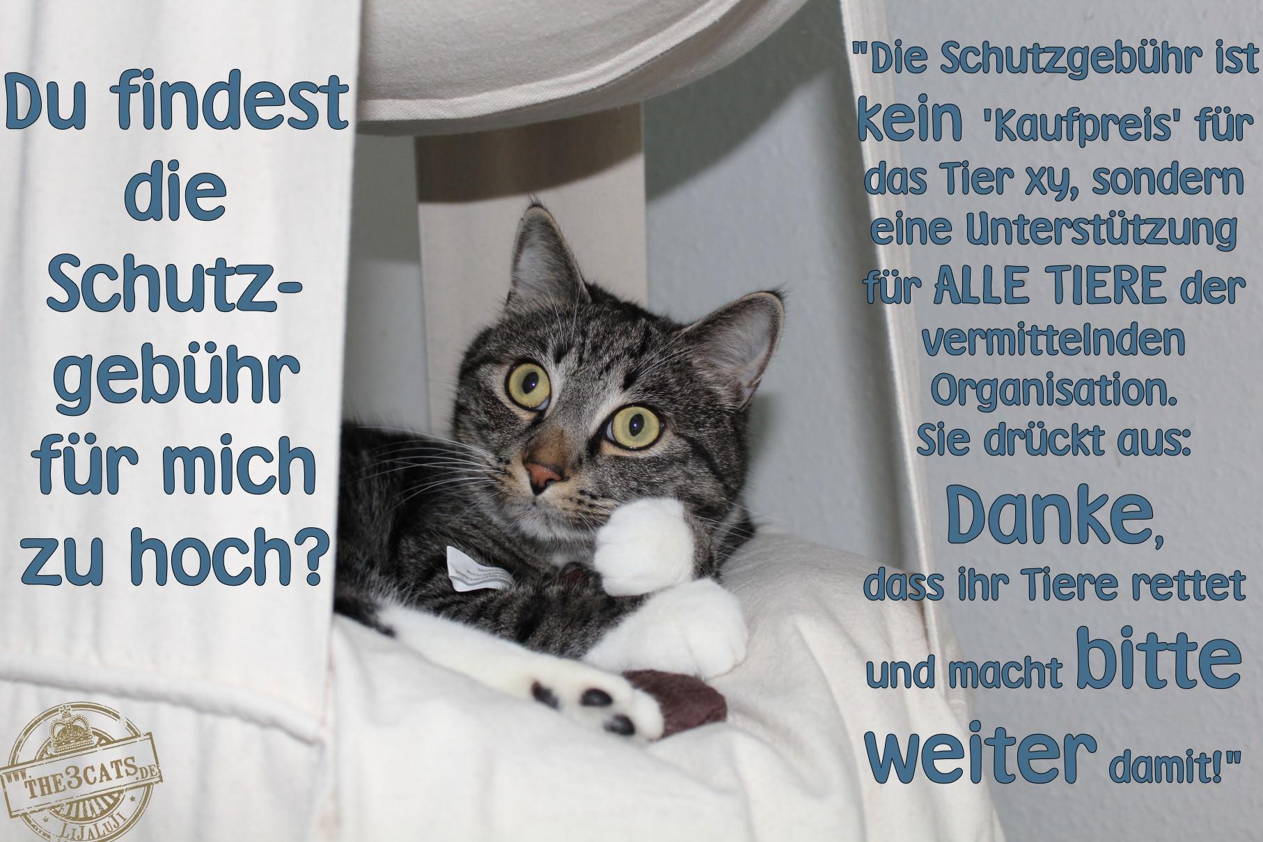Linus: Du findest die Schutzgebühr im Tierschutz zu hoch?