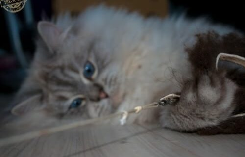 _the3cats_2015_12_28_2453
