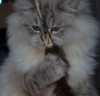 _the3cats_2015_12_28_2471