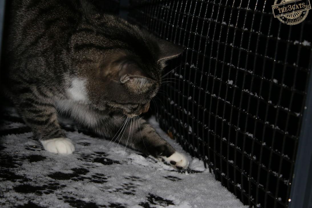Linus: Über echte Schneekatzen und Sibirische Pussys