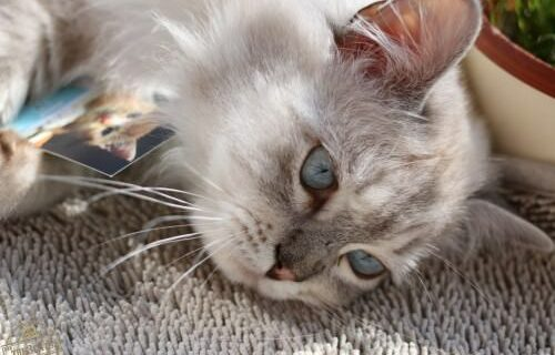 _the3cats_2016_03_26_5308