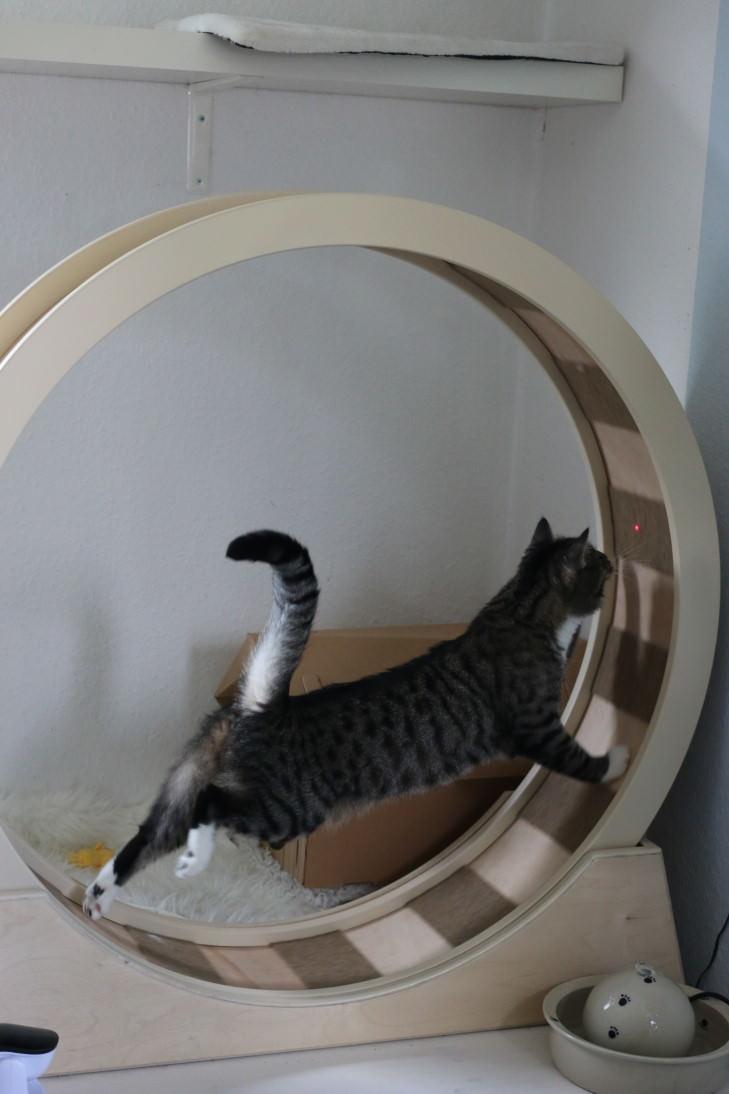 Linus: Das Höllenrad! [Laufrad für Katzen]