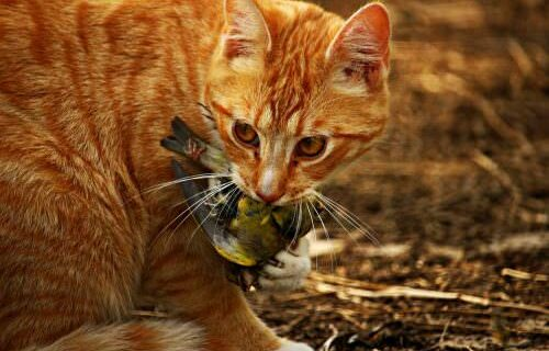 cat-1511026_1280