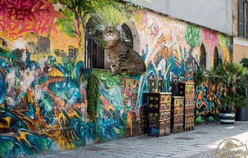 graffiti-1373849_1280