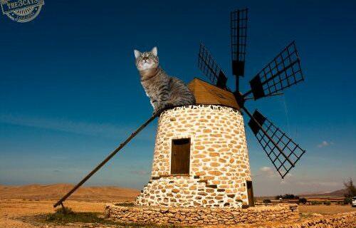 windmill-jasper