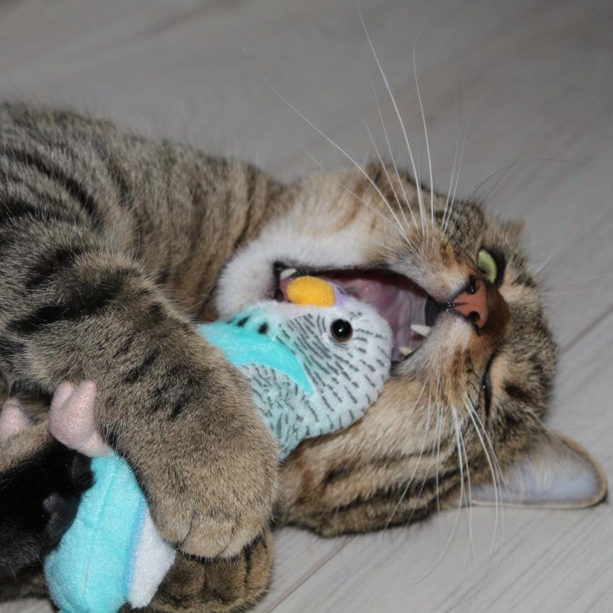 Jasper: Die Sache mit dem Doctor [Ernährungsberater für Hund & Katze bei chW]