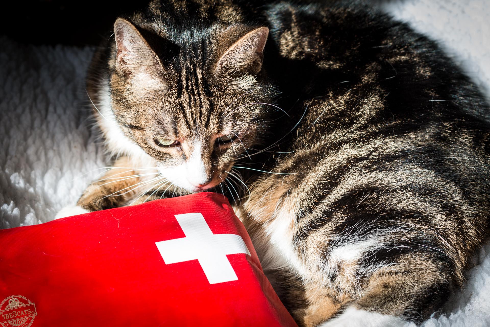 Jinpa: Erste Hilfe bei Katzen